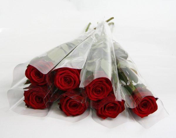 Roses keiki Pamiers
